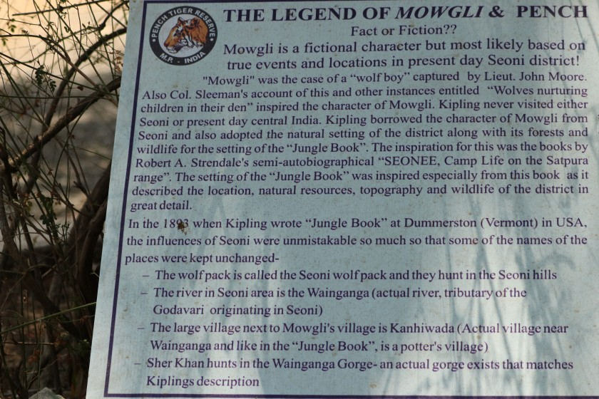mowgli pench.jpg